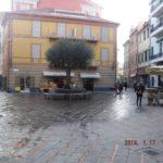 03 Ulivo secolare a dimora in Piazza Massena a Loano