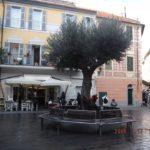 06 Ulivo secolare a dimora in Piazza Massena a Loano