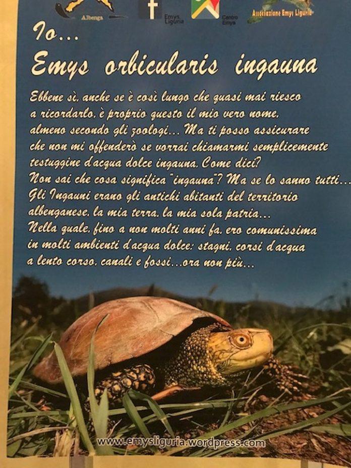 02 II Congresso nazionale testuggini e tartarughe Emys Albenga