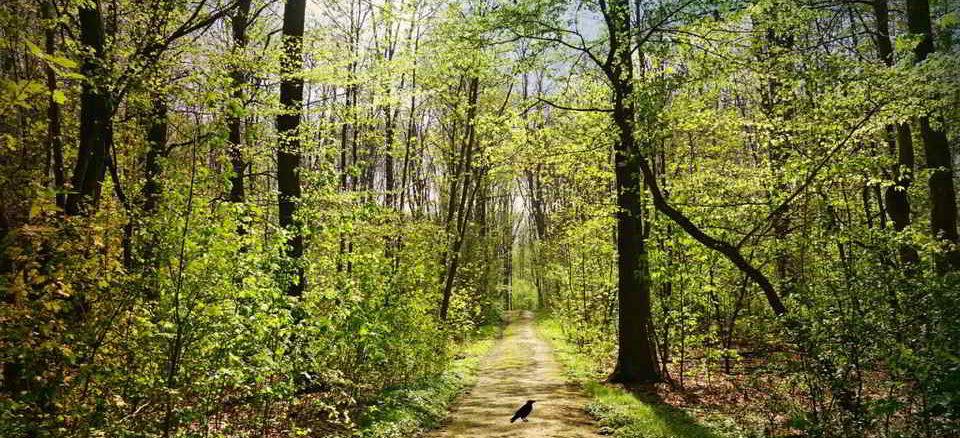 sentiero bosco