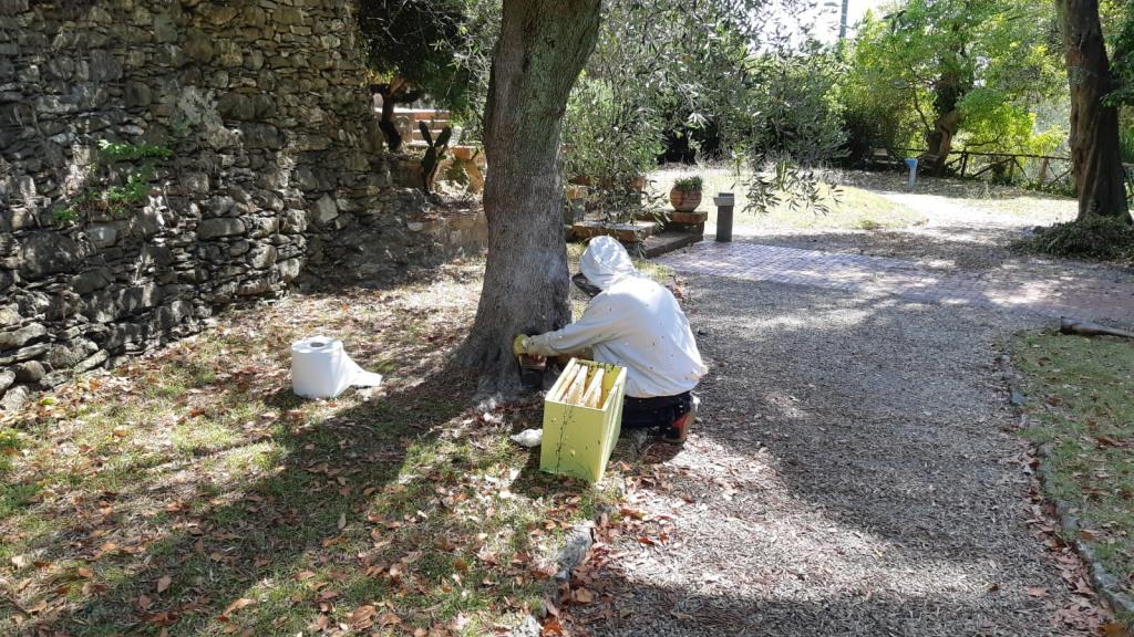 04 Cura del verde di Villa Fiske Alassio