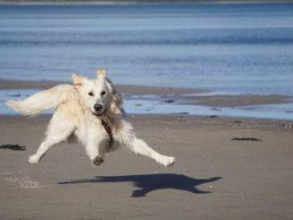 cane felice sulla spiaggia
