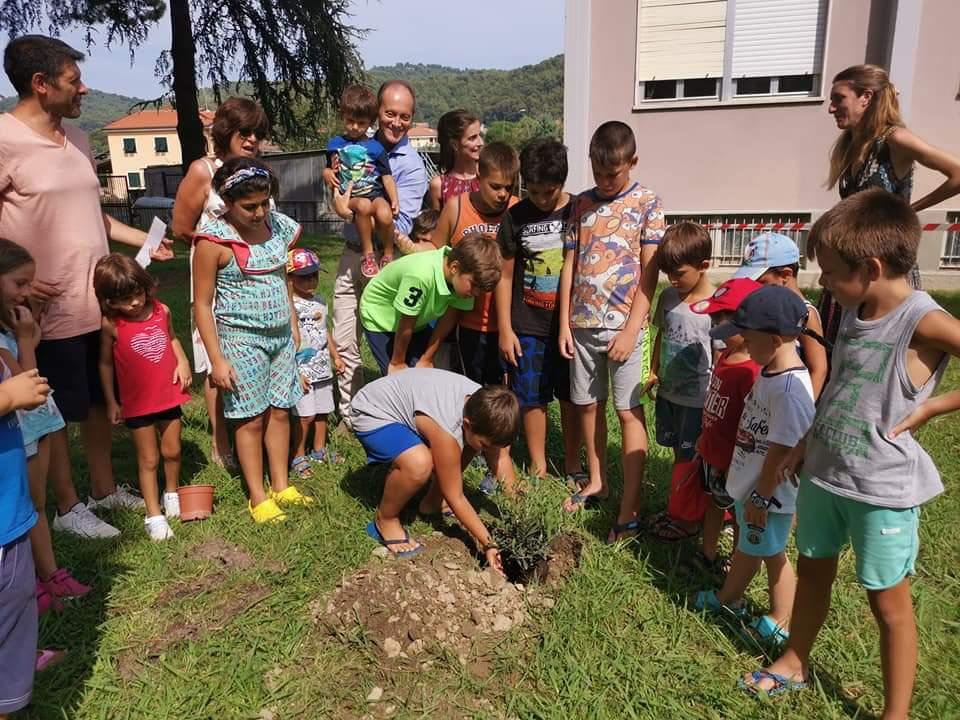 03 Campo solare due alberelli di ulivo nel giardino del Municipio Andora
