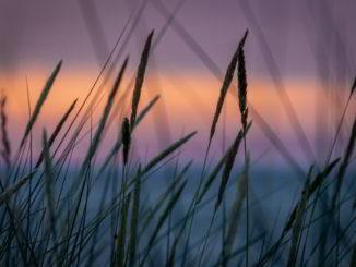 fili erba al tramonto