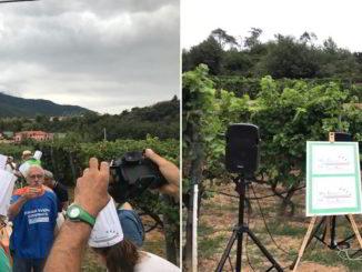 wine experience in una vigna di Albenga