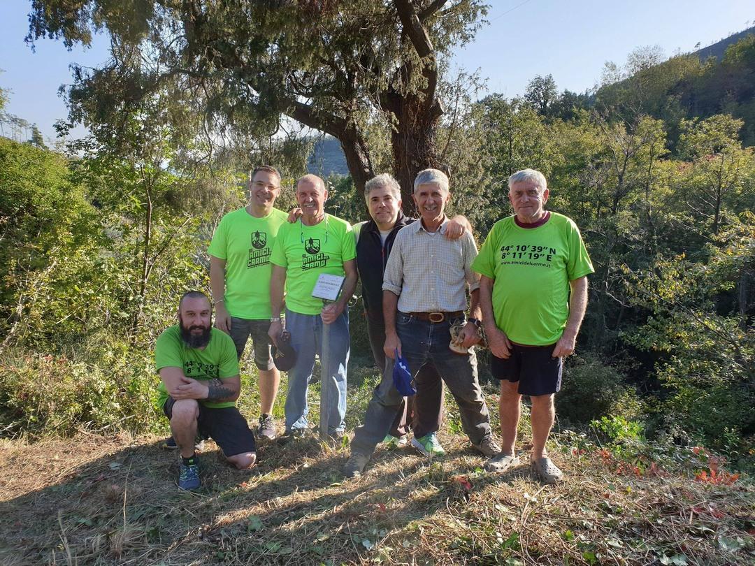 Amici del Carmo ripuliscono albero monumentale a Verzi di Loano 02