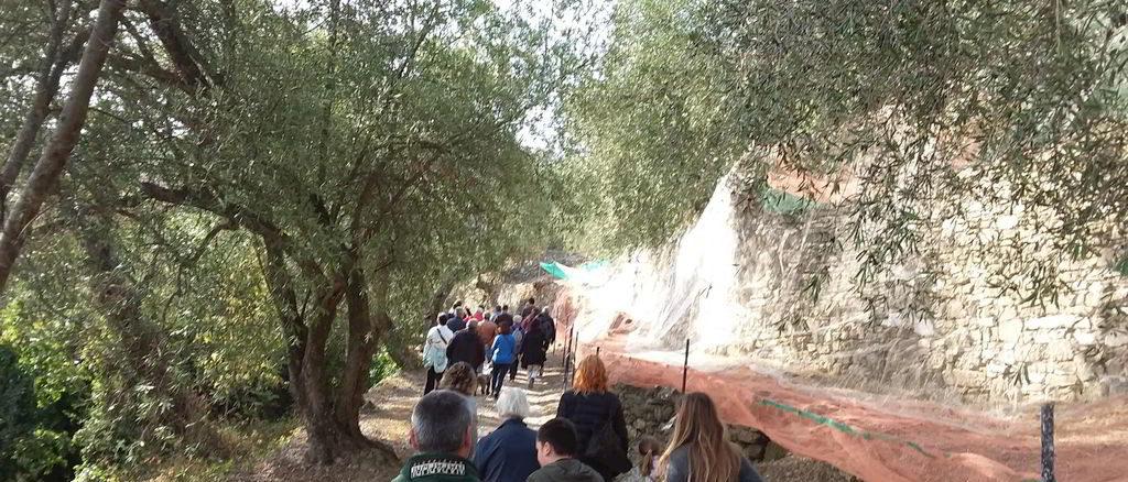 Camminata tra le fasce di ulivi entroterra di Andora