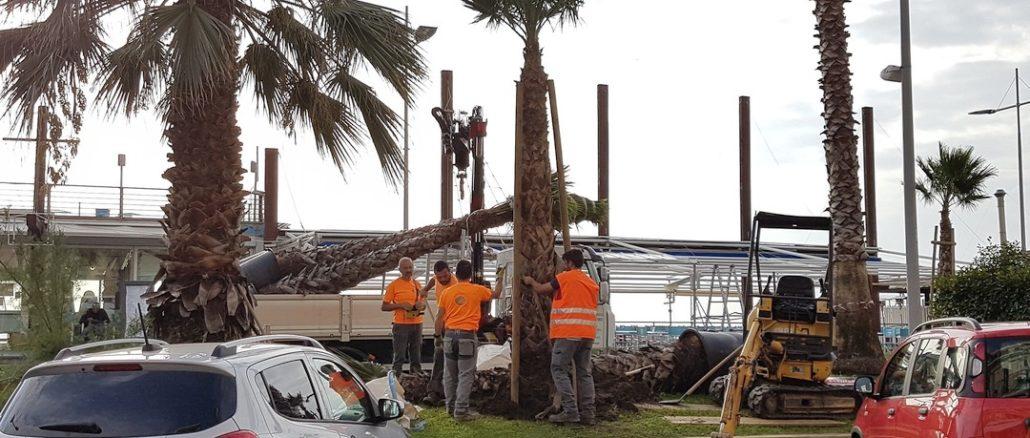 Nuove palme passeggiata di Loano