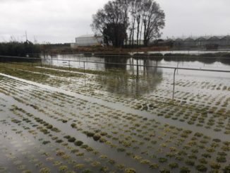 Piana albenganese danni imprese agricole