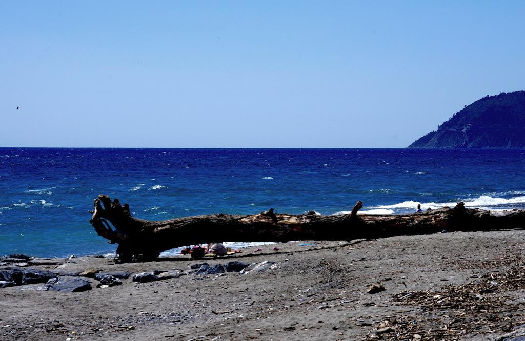 Spiaggia legna mare ad Albenga