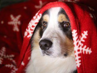 cane natalizio