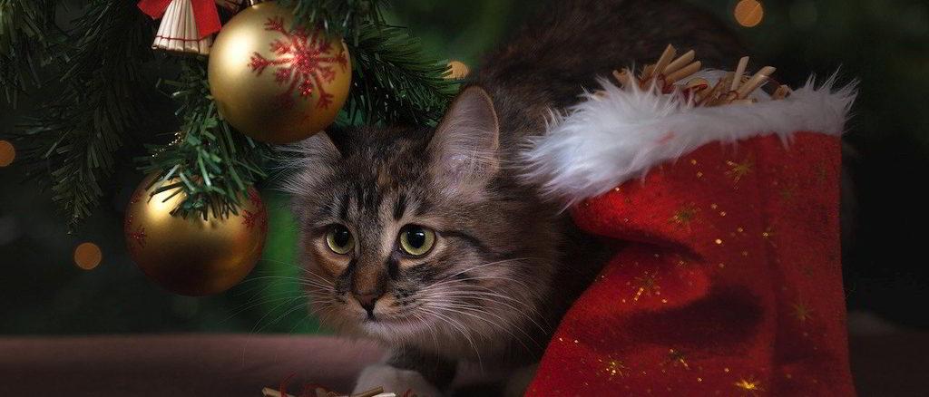 un gatto natalizio