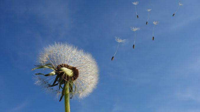 Cielo ventoso