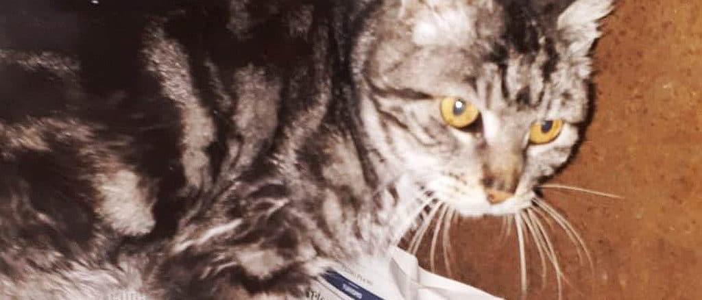 La gatta Mariuccia
