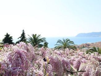 lilac Giardini di Villa della Pergola ad Alassio