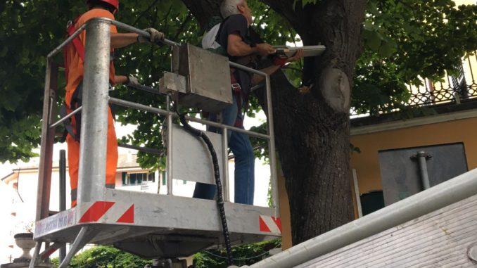 Albenga verifica alberi in Vuiale Martiri