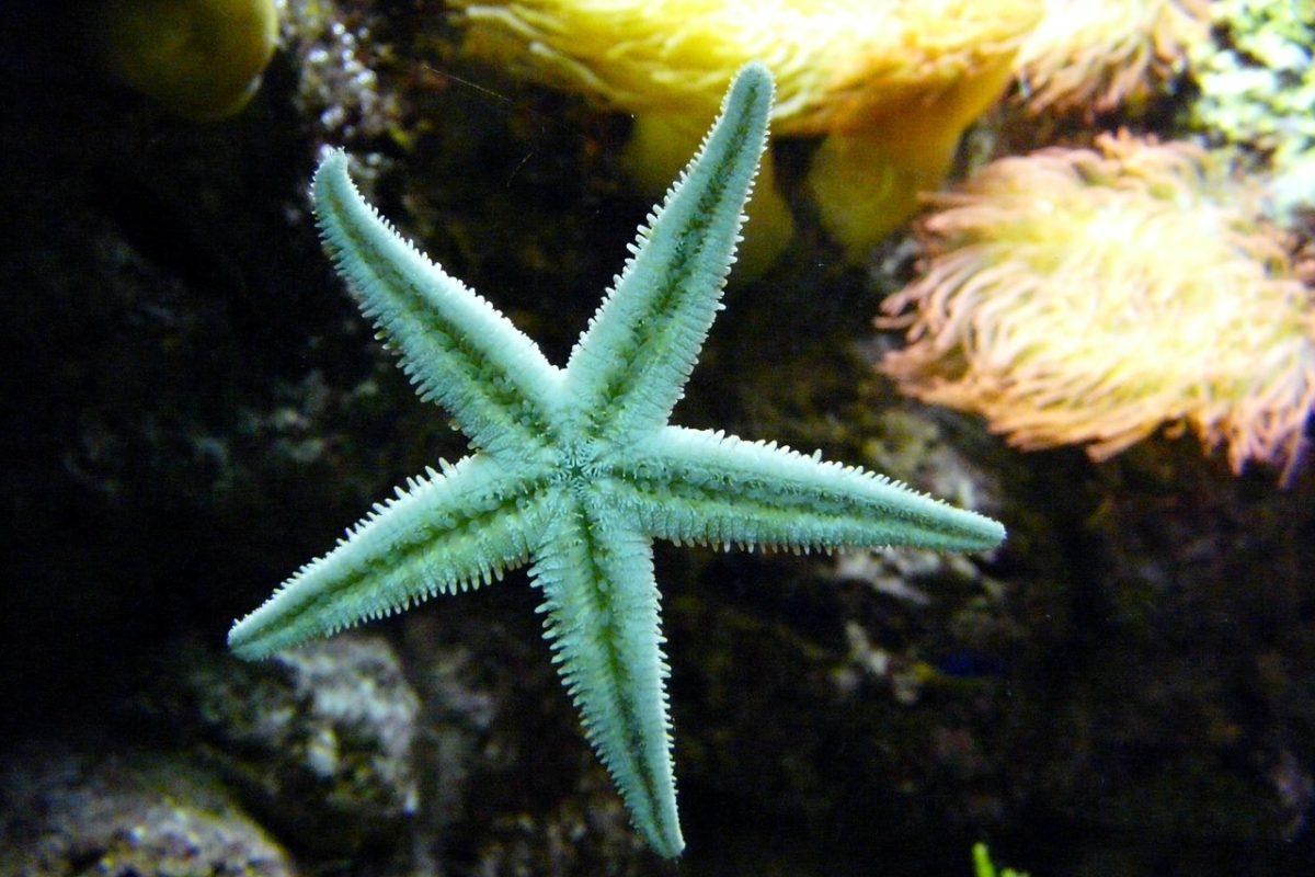 Stella marina per Enpa Savona