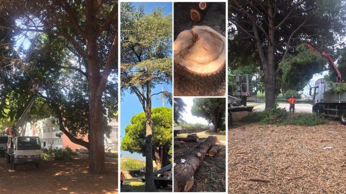 Albenga alberi via degli orti