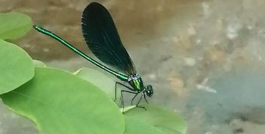Rialto - presso la cascata delle libellule blu