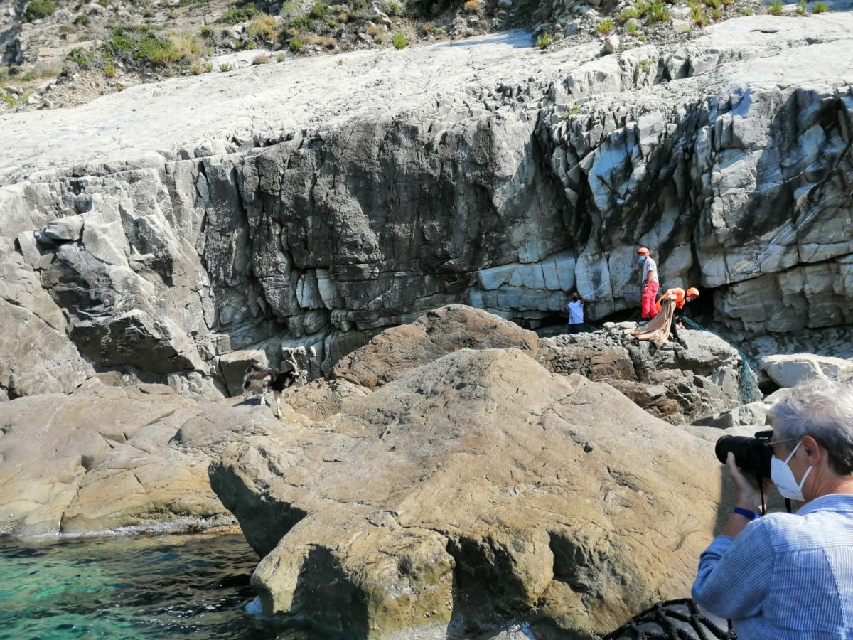 salvataggio caprette imprigionate scogliera tra Levanto e Monterosso
