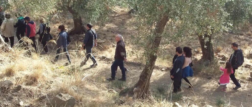 Andora - percorso Camminata fra gli ulivi