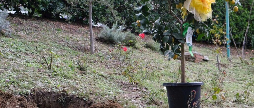 pianta Coldiretti