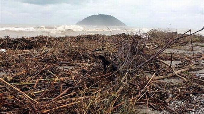 legname sulla spiaggia di Albenga