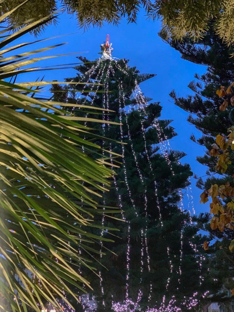 Luminarie natalizie Alassio 2020 - Albero vicino