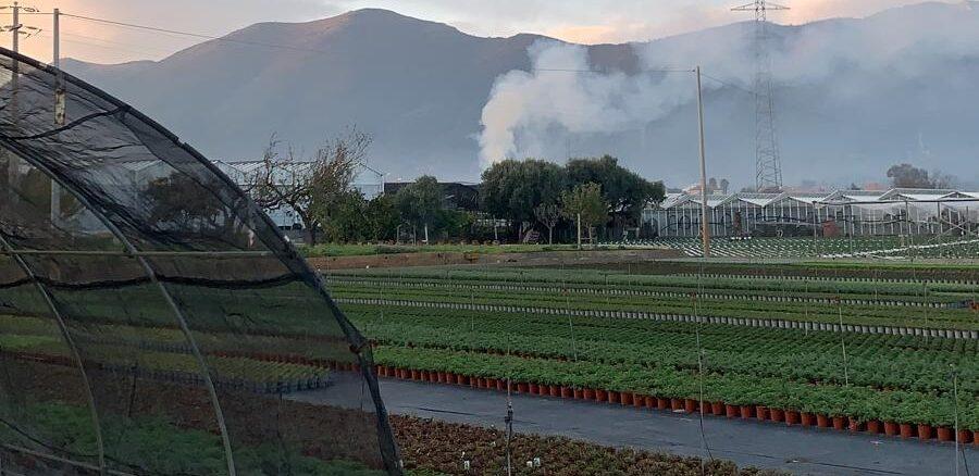 abbruciamenti ad Albenga