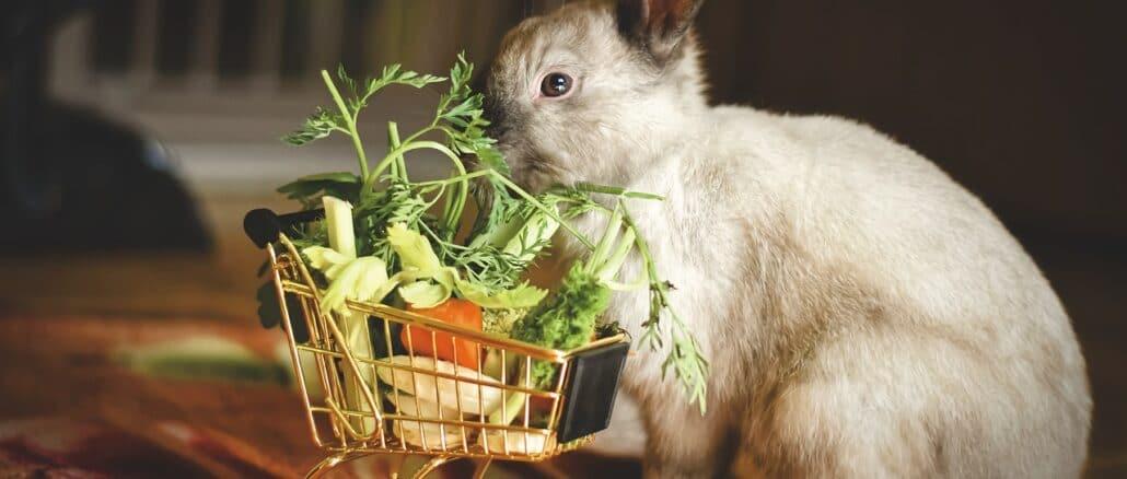 coniglio carrello spesa