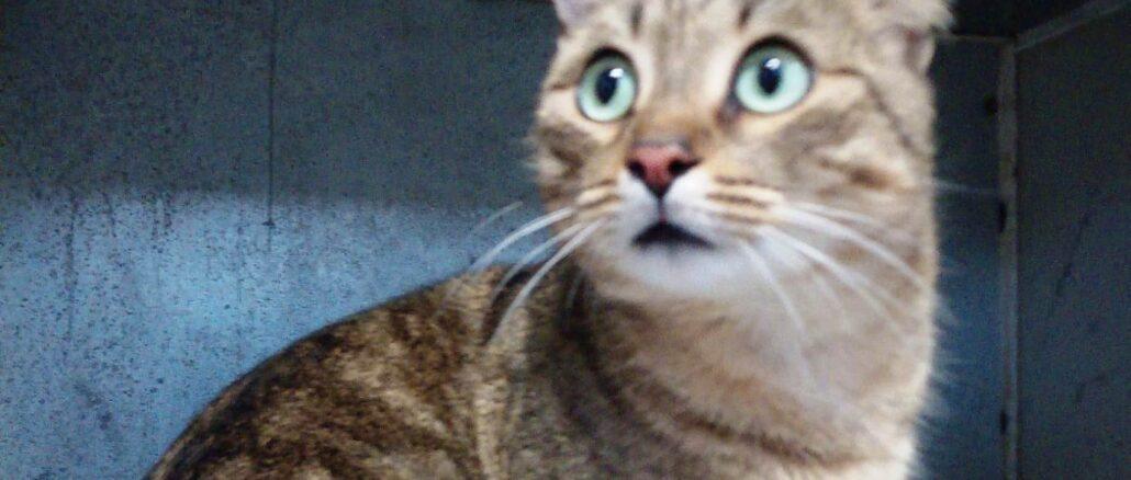 gatto Albenga