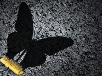 farfalla digitale