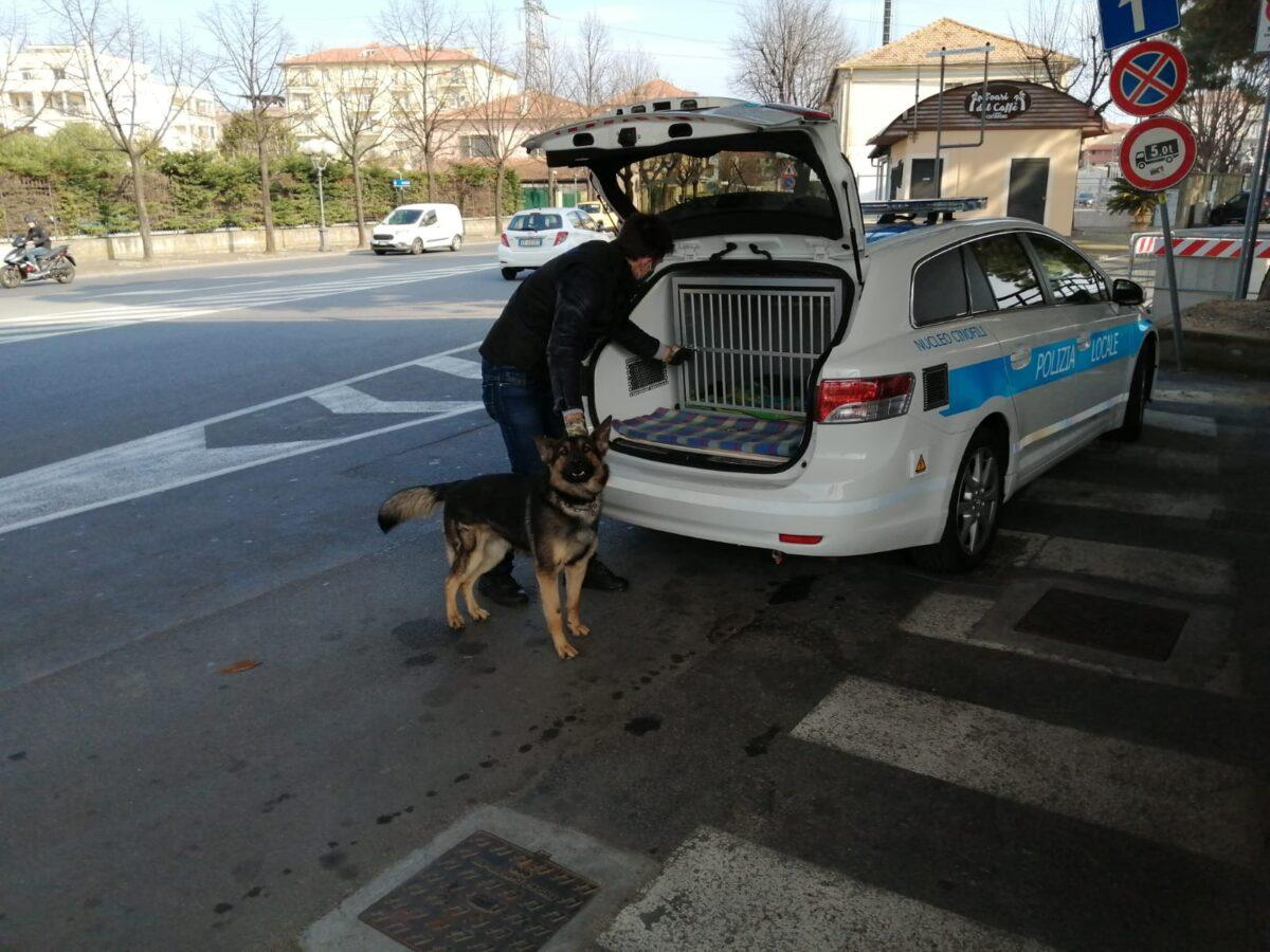 Albenga unita cinofila lupo