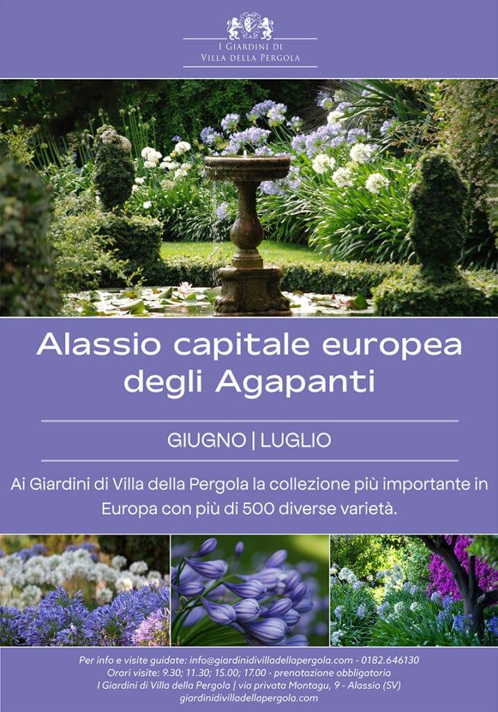 Alassio capitale Agapanti 1