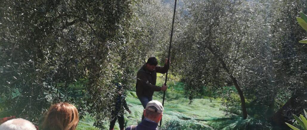 merenda in oliveto ad Andora