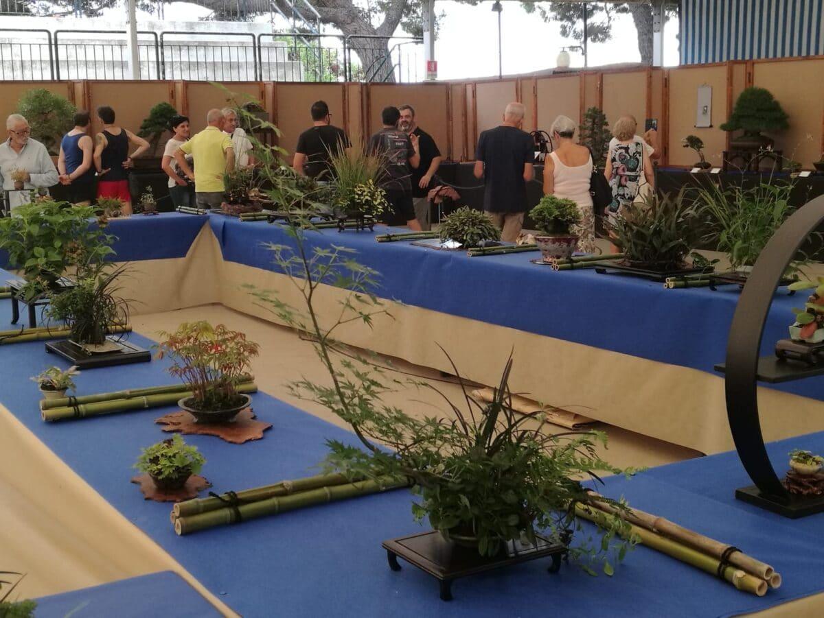 Festival bonsai ad Andota Foto archivio edizione 2018 02