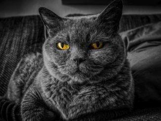 Lo sguardo del gatto